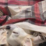 寝正月犬🐶