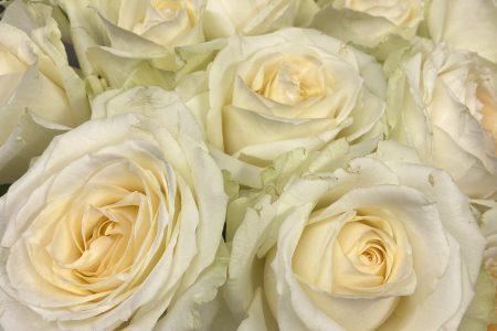 今週のお花💐